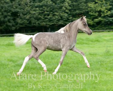 Grey & White baby
