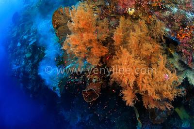Banda Sea - The Forgotten Islands