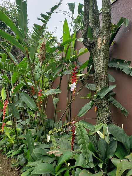 cousin Heloisa's garden