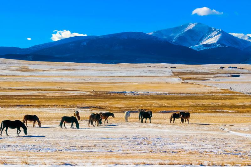 Animals-Horses-20.jpg