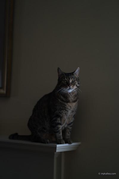 Pets-295.jpg