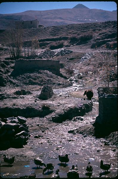 Tibet_Shanghai1_120.jpg