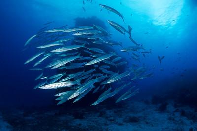 Ribbon & Far Northern Reefs