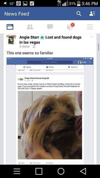 Yorkies Found Las Vegas
