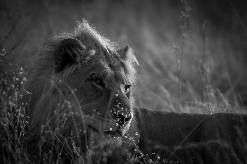 Botswana_June_2017 (5582 of 6179).jpg