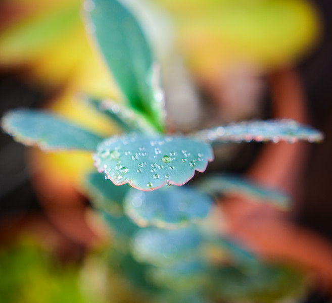 succulent 0619-8076.jpg