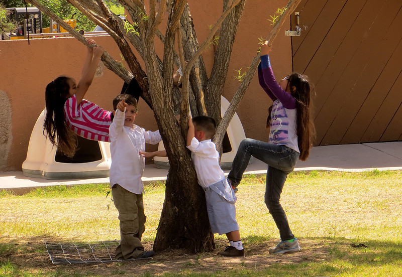 IMG_1884 kids playing on tree.jpg