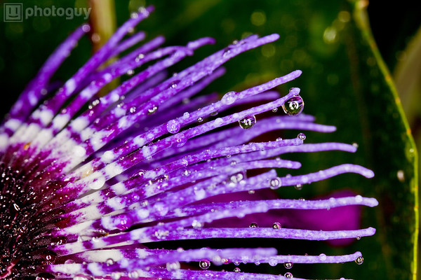 Purple Flower With Rain Droplets