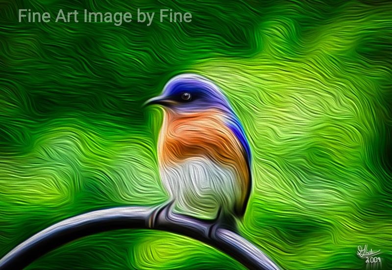 Poppa Bluebird