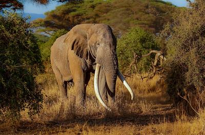 Kingdom of the Elephants Jan 2022/23