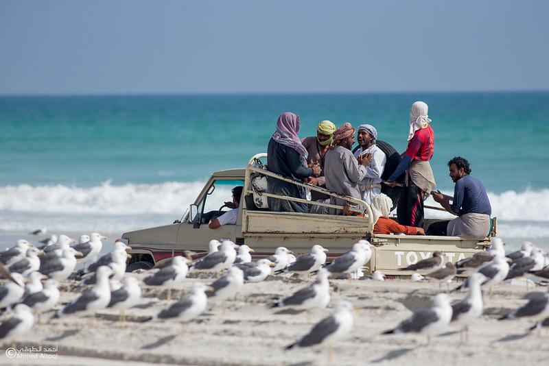 Sardine Season (78)- Dhofar.jpg