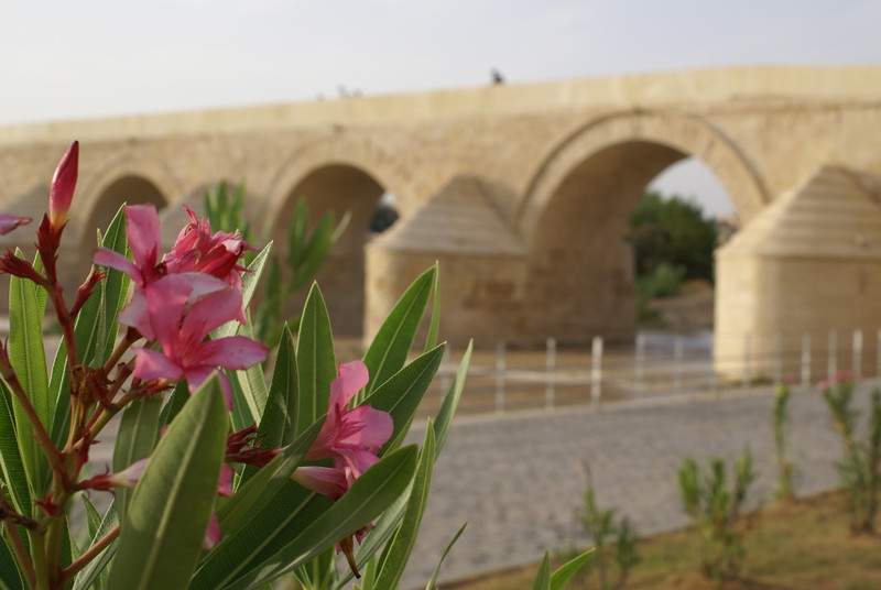 Roman bridge, full bloom, Cordoba