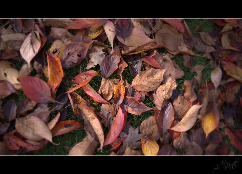 Autumn's Calling Cards
