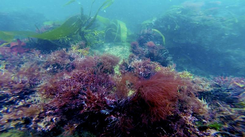 Devon-Underwater-24.jpg