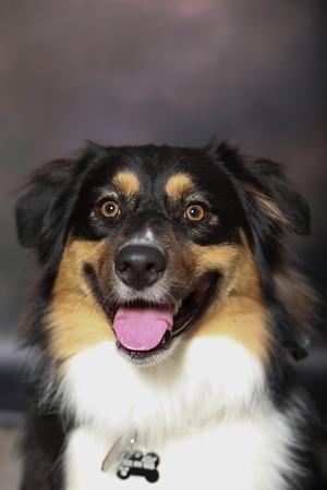 Dog Training 3-13-2021