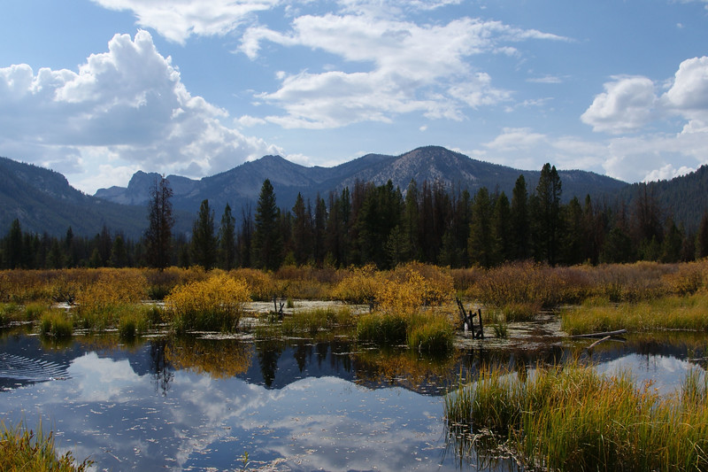 7 sawtooth meadow 1.jpg