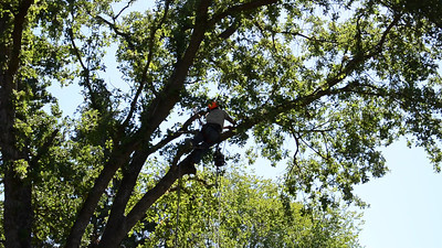 Laurel Drive Tree Work May 30-31, 2013