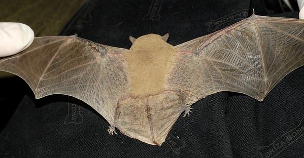 Un-identified bats