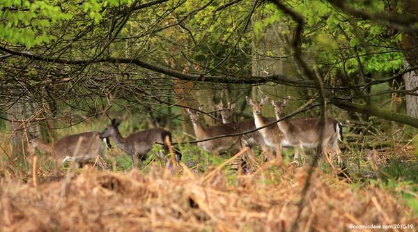 Deer Set 2