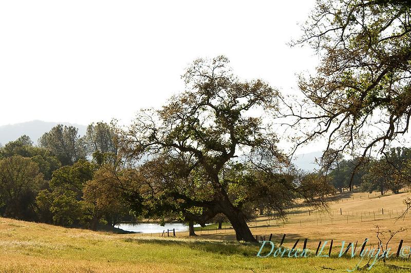 Countryside_079.jpg