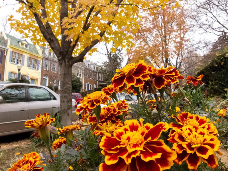 nov 19 - flowers.jpg
