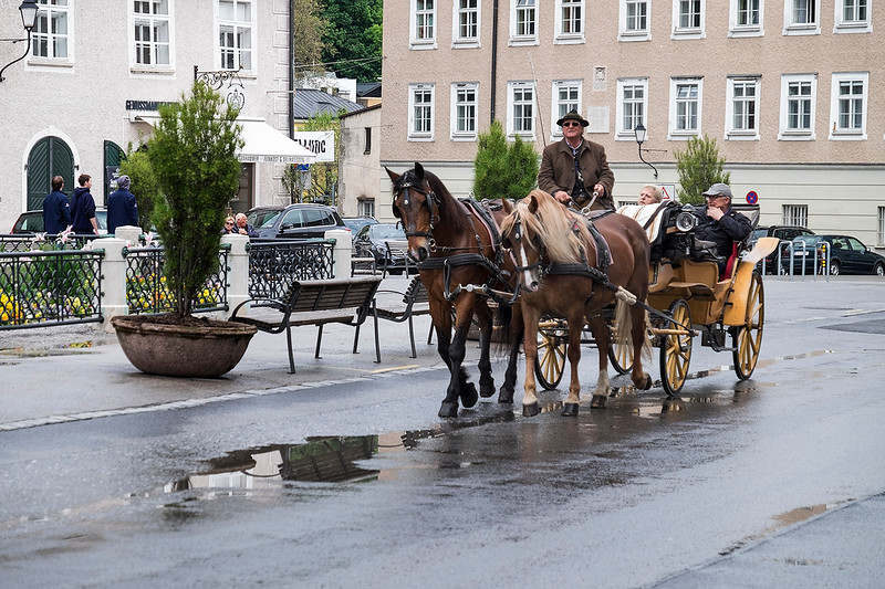 Horses and Carriage 1605173562-1.jpg