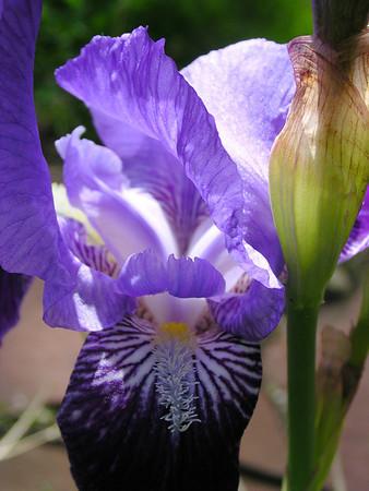 Iris 2008 @ Shankar Gallery