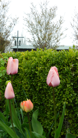 Monastery Garden in Bloom 2021