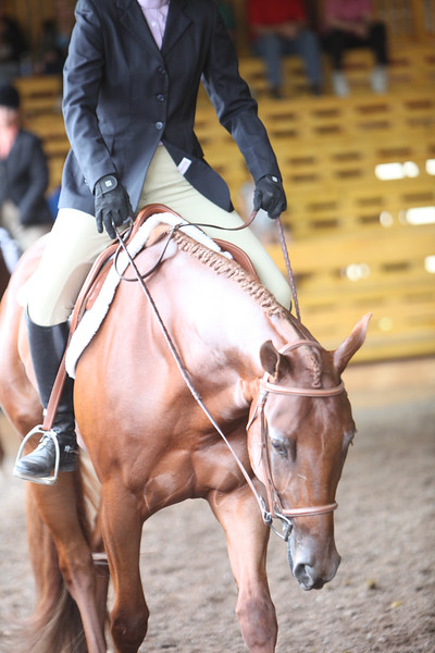 Novice Amateur Hunter Under Saddle