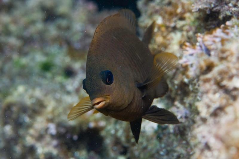 20090414_Underwater_Mexico_0043.jpg