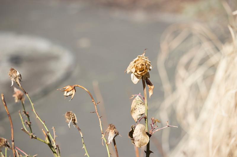 KoRedfield-Floral69.jpg