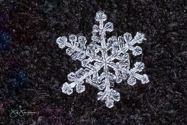 snowflakes-1193.jpg