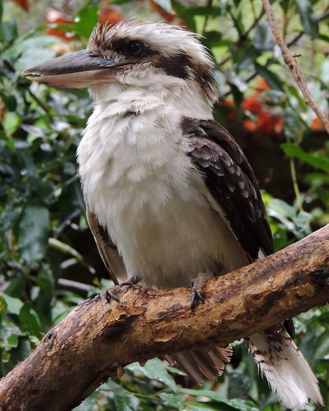 Cairns Tropical Zoo 006 N.jpg