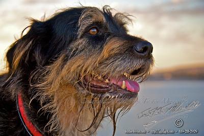 Location Fiesta Island - Dogs
