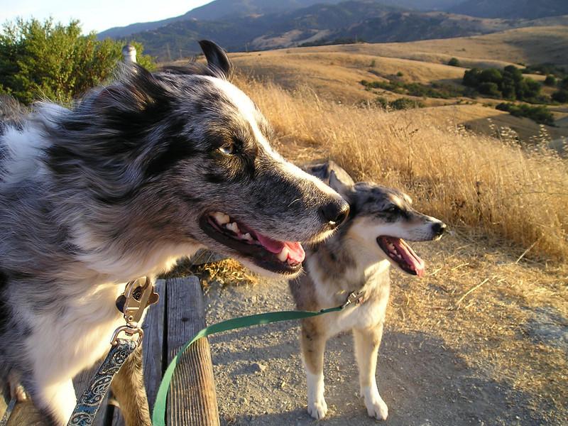 A brisk breeze felt nice. Hmmm, Boost's ears and fur blow in the wind; Tika looks unruffled.