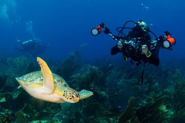 Turtles of Bonaire