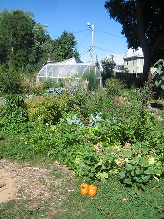 Jonathan's garden