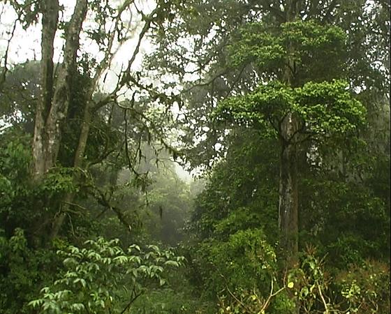 forest 7.jpg