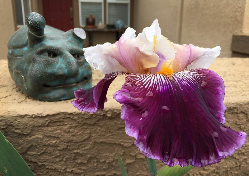 sluggie and the iris.jpg