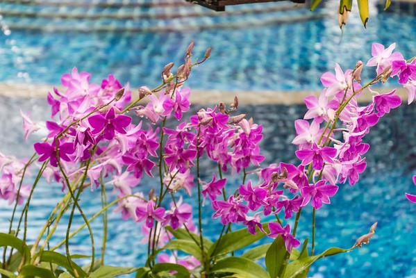 Flowers @ Mangosteen Resort