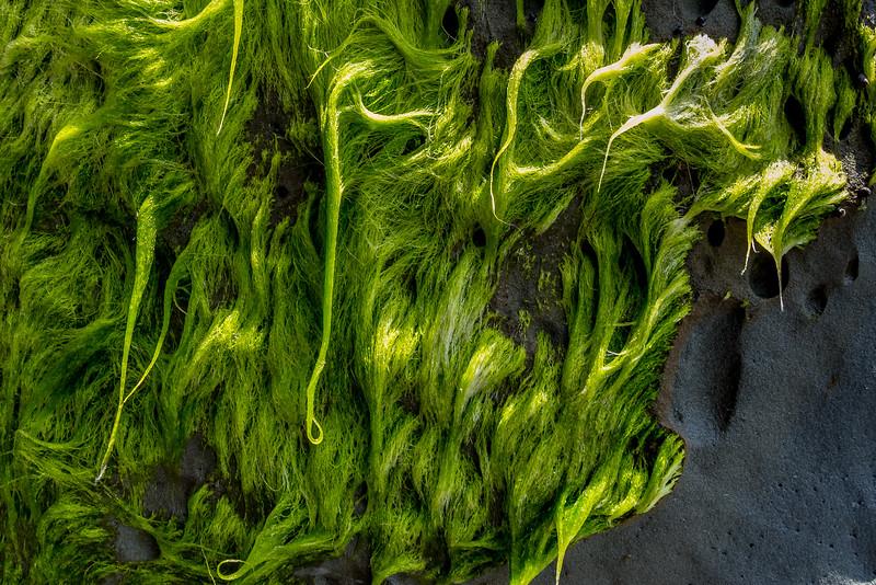 Algen beim Rapanui Stream