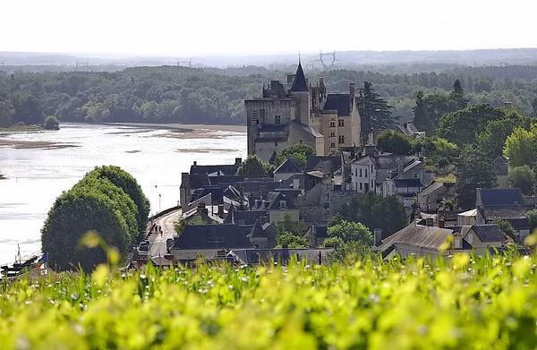 Chateau de Monsoreau vu des vignes