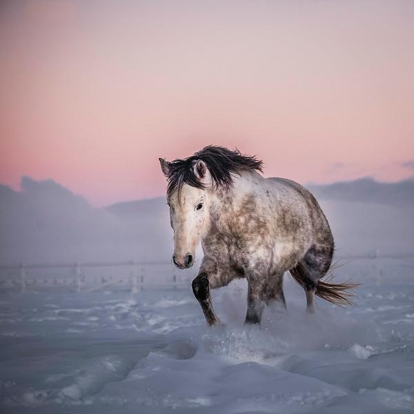grey horse in snow at sunrise.JPG