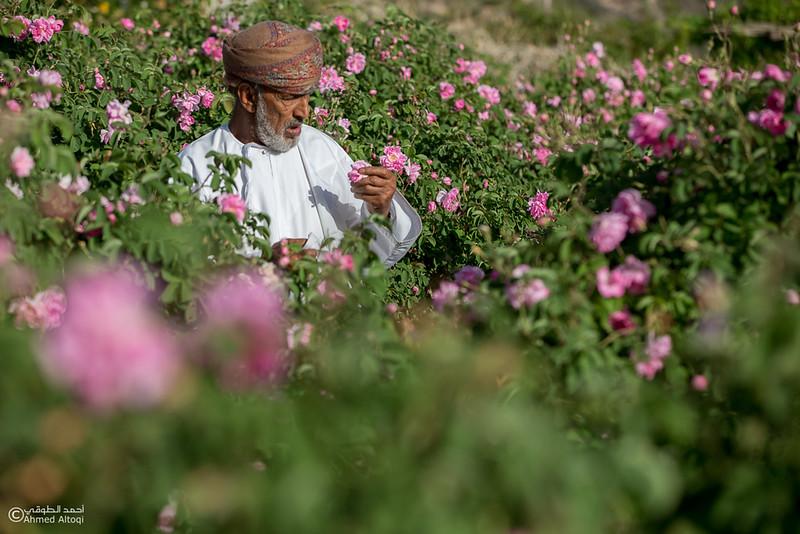 Roses Water (58)-Aljabal Alakhdhar-Oman.jpg