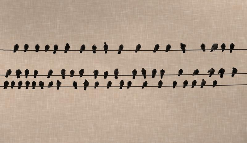 2015-12-26 Birds on a Wire_linen background C260092.jpg