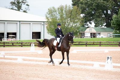 Horse 363