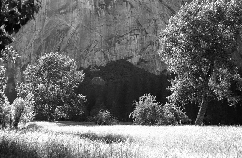 Meadow at Half Dome