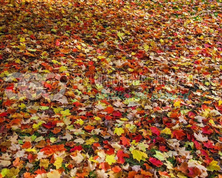 Autumn-Floor_batch_batch.jpg