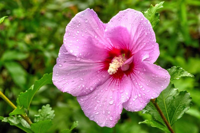 Garden 1, 060.jpg