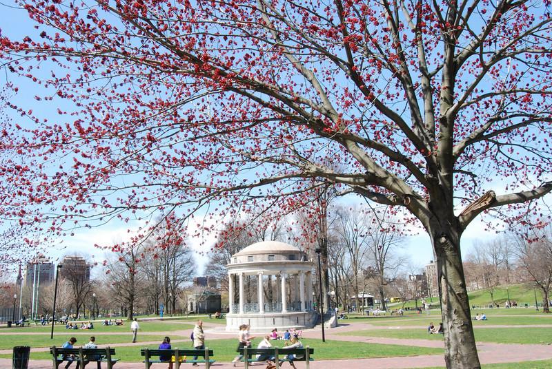 Boston Commons in springtime